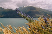 Fahrt nach Queenstown (Lake Wanaka)